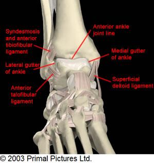 Anterior Ankle Exam