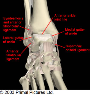 Anterior Ankle History